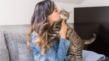 Do Cats Like to Be Kissed?