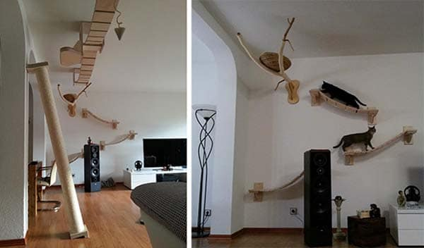incroyable arbre à chat