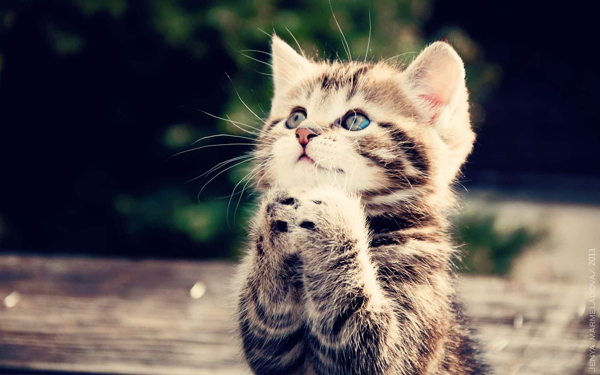 Fonds d'écran de chat gratuits • MonChat.ca