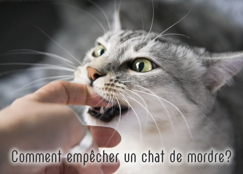 Chat qui mord les doigts