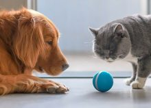 Photo de Chien vs Chat: Lequel est le plus intelligent?