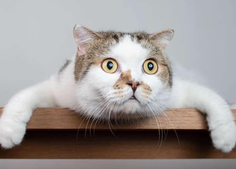 Adorable chat surpris