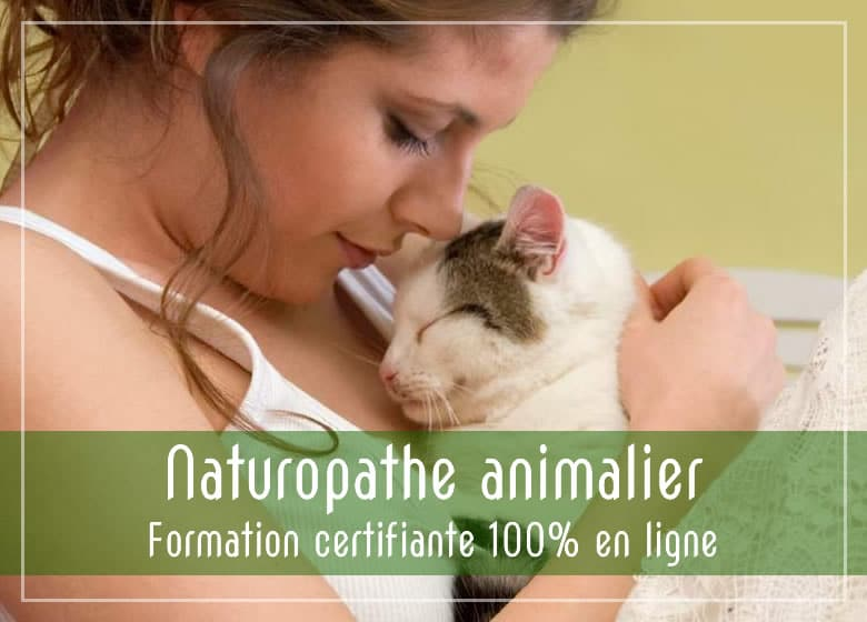 Formation en ligne naturopathie animale